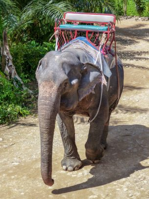 Thailand Khao Sok Nationalpark Dschungel Win Elephant Camp Elefantencamp Elefantenreiten Elefant