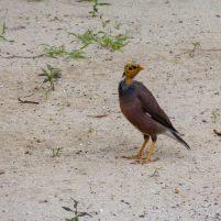 Thailand Koh Ngai Koh Hai Insel Andamanensee Inselparadies Strand Vogel