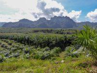 Thailand Khao Sok Nationalpark Dschungel Ausblick