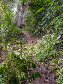 Thailand Khao Sok Nationalpark Dschungel Anurak Community Lodge Dschungelpfad Wildnis Matsch