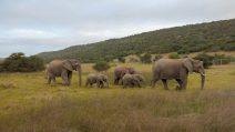 Südafrika South Africa Sibuya Game Reserve Safari Elefanten