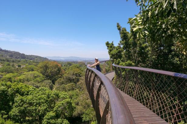 Südafrika South Africa Kapstadt Cape Town Kirstenbosch Botanical Garden Botanischer Garten Baumwipfelpfad Canopy Walk