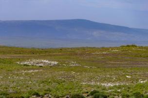 Südafrika South Africa Kap De Hoop Nature Reserve Naturreservat Landschaft Bontebok Buntbock Antilope