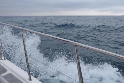Südafrika South Africa Hermanus Kap Walker Bay Whale Watching Walbeobachtung Southern Right Charters Whale Wal Katamaran Meer