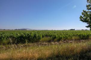 Südafrika South Africa Weinregion Winelands Stellenbosch Hoopenburg Guesthouse Weinfelder