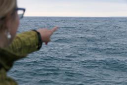 Südafrika South Africa Hermanus Kap Walker Bay Whale Watching Walbeobachtung Southern Right Charters Whale Wal südlicher Glattwal Südkaper