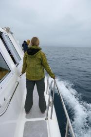 Südafrika South Africa Hermanus Kap Walker Bay Whale Watching Walbeobachtung Southern Right Charters Whale Wal Katamaran
