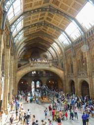 Großbritannien England UK London Natural History Museum Halle Foyer