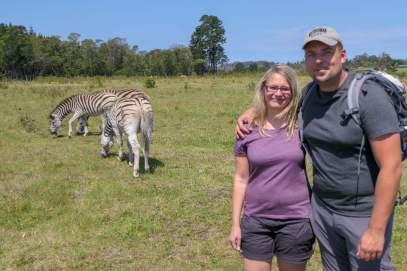 Afrika Südafrika South Africa Garden Route Knysna Elephant Park Zebras