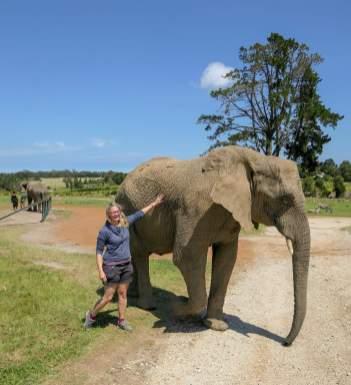Afrika Südafrika South Africa Garden Route Knysna Elephant Park Elefanten streicheln