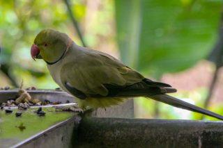 Südafrika South Africa Garden Route Kap Plettenberg Bay Birds of Eden Vogelvoliere Saana Vögel Papagei