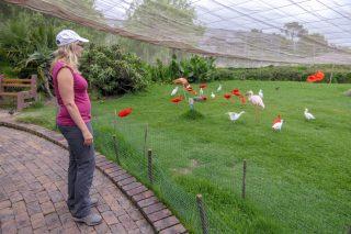 Südafrika South Africa Garden Route Kap Plettenberg Bay Birds of Eden Vogelvoliere Saasa Vögel