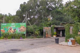 Südafrika South Africa Garden Route Kap Plettenberg Bay Monkeyland Saasa Affen Eingang
