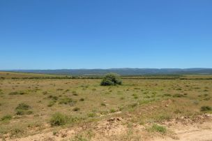 Südafrika South Africa Garden Route Ostkap Addo Elephant Nationalpark Safari Tiere Landschaft