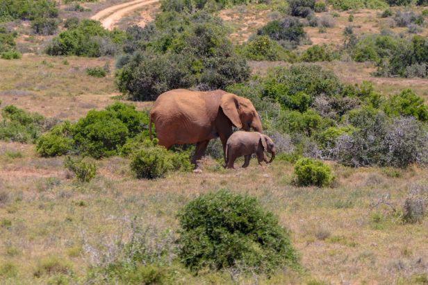 Südafrika South Africa Garden Route Ostkap Addo Elephant Nationalpark Safari Tiere Elefant Elefantenbaby