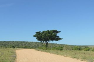 Südafrika South Africa Garden Route Ostkap Addo Elephant Nationalpark Safari Baum
