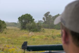 Südafrika South Africa Garden Route Ostkap Sibuya Game Reserve Wildreservat Game Drive Safari Löwen