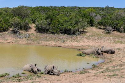 Südafrika South Africa Garden Route Ostkap Sibuya Game Reserve Wildreservat Safari Nashorn Nashörner Wasserloch