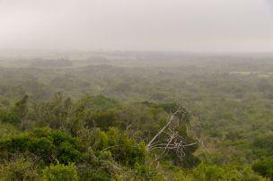 Südafrika South Africa Garden Route Ostkap Sibuya Game Reserve Wildreservat Morgen Safari Game Drive Busch