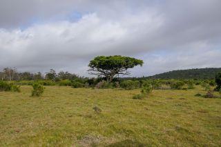 Südafrika South Africa Garden Route Ostkap Sibuya Game Reserve Wildreservat Safari Game Drive