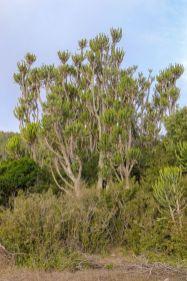 Südafrika South Africa Garden Route Ostkap Sibuya Game Reserve Wildreservat Safari Game Drive Pflanzen