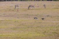 Südafrika South Africa Garden Route Ostkap Sibuya Game Reserve Wildreservat Safari Game Drive Zebra Antilope Affen