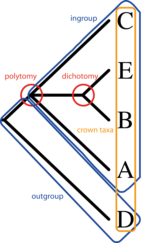 Worksheet Cladograms Worksheet Grass Fedjp Worksheet
