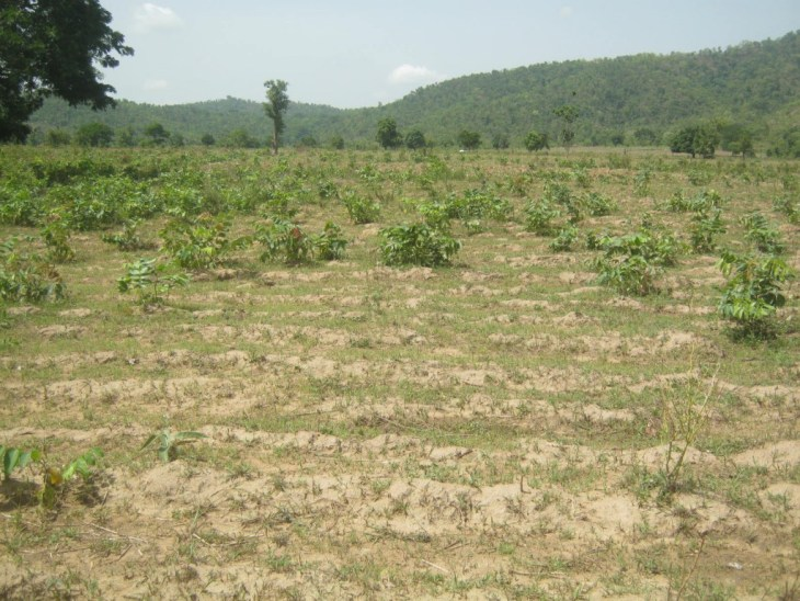 The proposed site for a university in Abuja