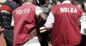 NDLEA Secures 299 Convictions, Recovers 37, 651 kg Of Drugs In Kano