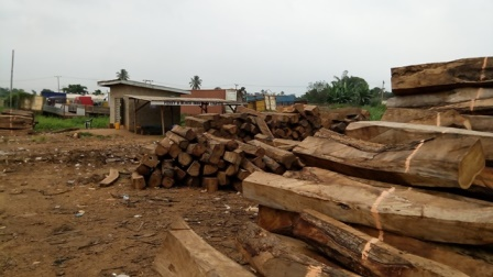 Rosewood logs at a Sagamu depot cut to export size