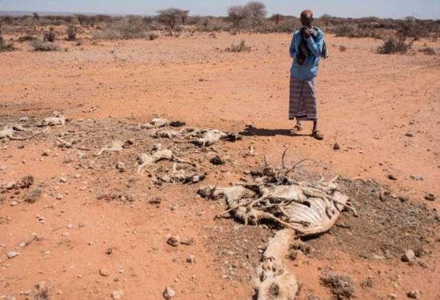 Somalia Declares Famine National Disaster