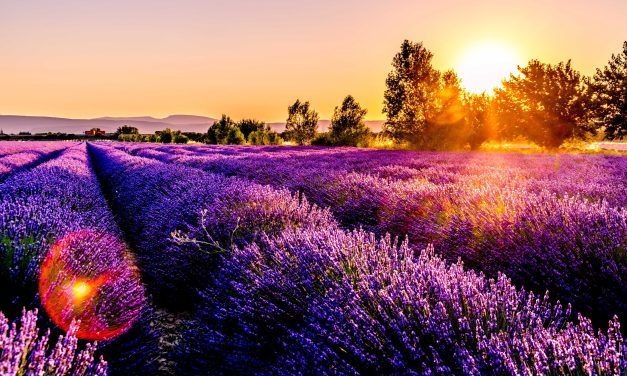 Discover Provence in the Pacific Northwest