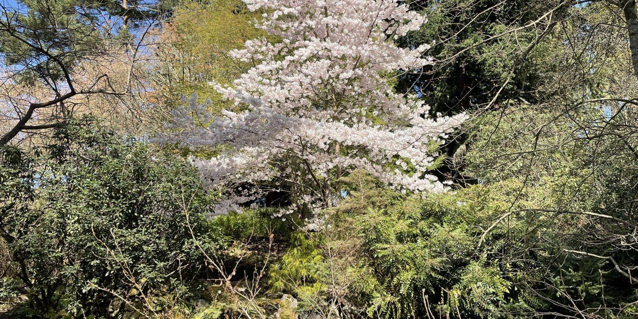 Toute la beauté de la flore du Pacific NorthWest au Jardin Botanique de Bellevue