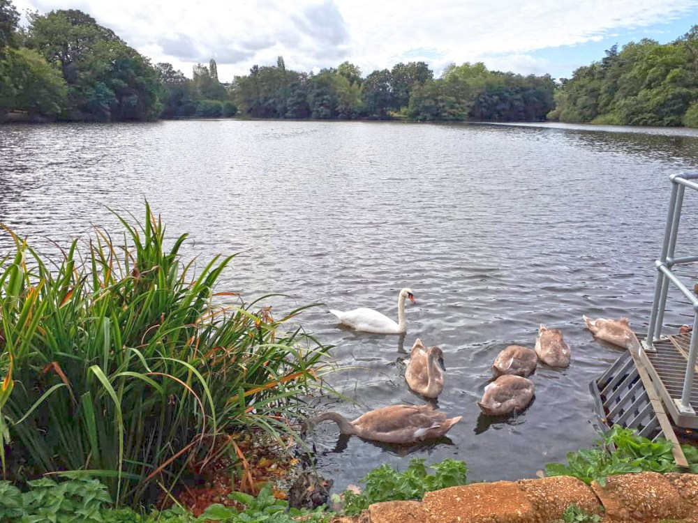 Whiteknights Lake on campus