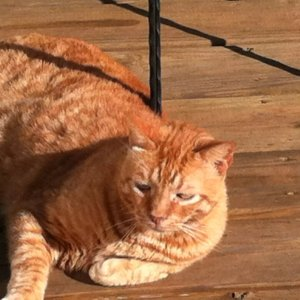 Tigger on the deck