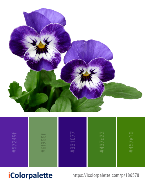 Color Palette ideas from 8169 Flower Images | iColorpalette