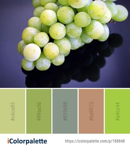 Color Palette Ideas from Fruit Grapevine Family Grape Image ...