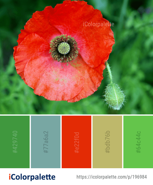 Color Palette Ideas From Flower Wildflower Poppy Image Icolorpalette