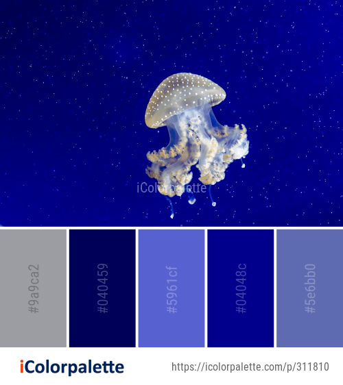 19 Jellyfish Color Palette ideas in 2020 | iColorpalette