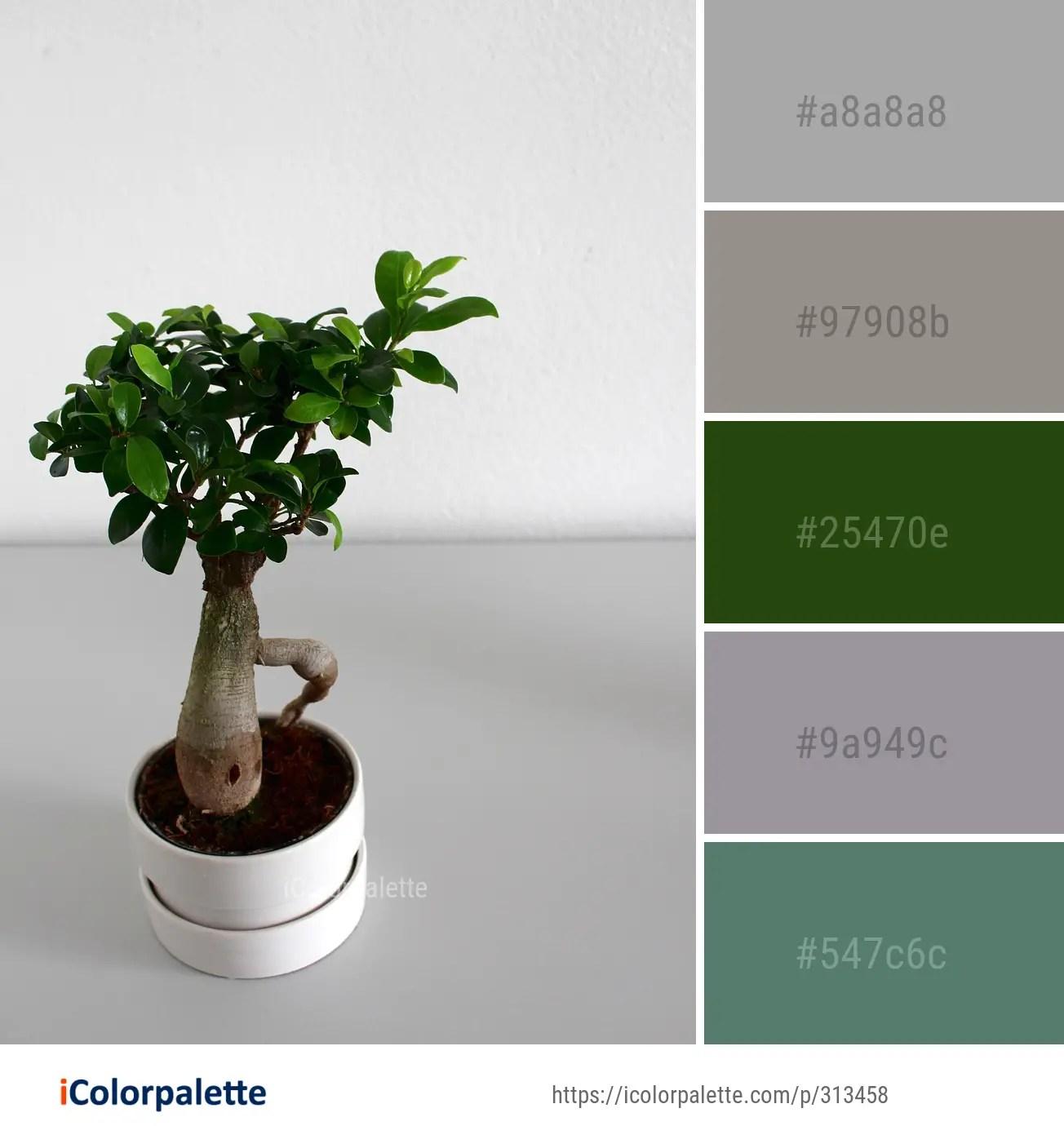 10 Bonsai Color Palette Ideas In 2021 Icolorpalette