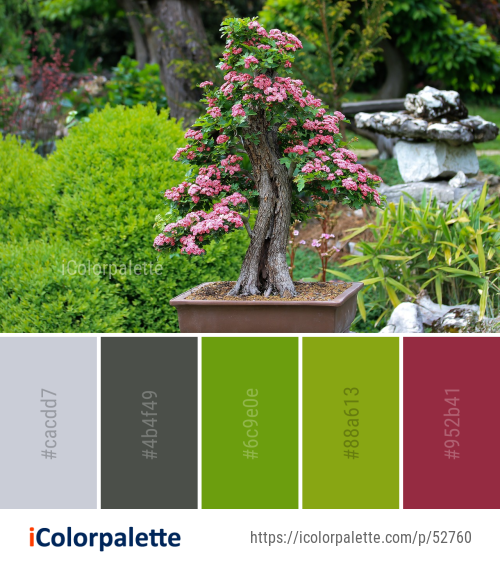 Color Palette ideas from 4 Bonsai Images   iColorpalette