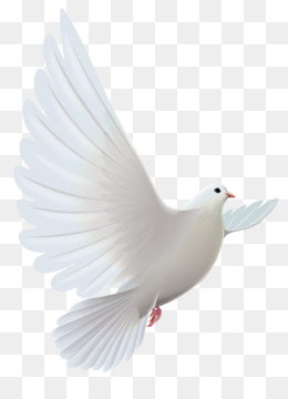 White PNG Amp White Transparent Clipart Free Download Pigeons And Doves Bird Prayer Clip Art