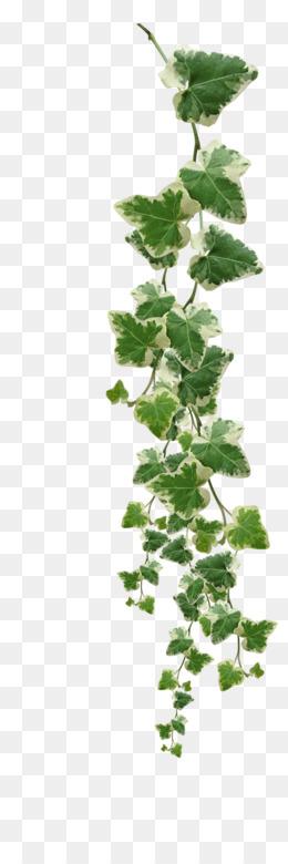 Vine Clip Art Plants Png Png Download 900 1170 Free