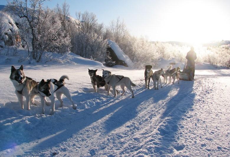 SNOW HOTEL KIRKENES – Bjørnevatn, Norway - dog sled