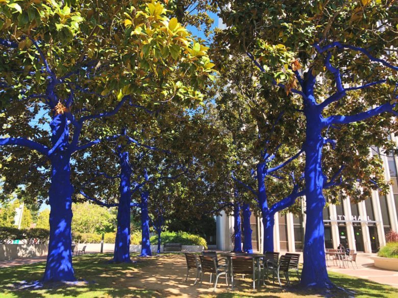 Palo Alto Blue Trees