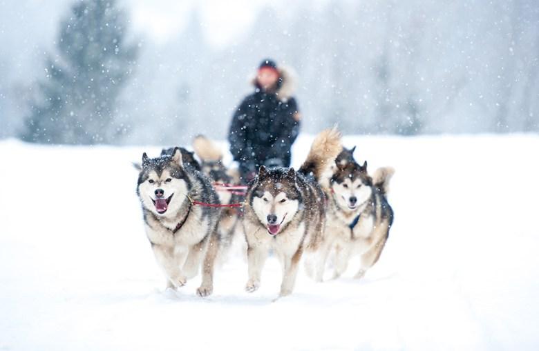 dog sledding Deer Valley UT