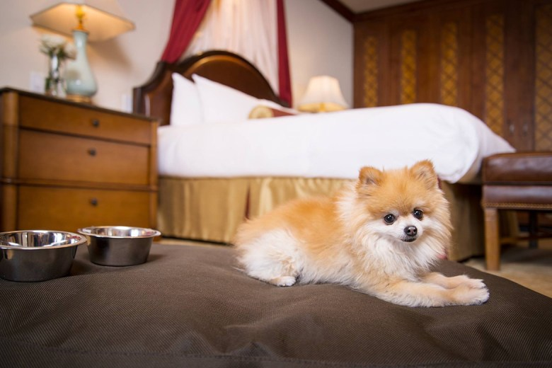 Arrabelle at Vail Square luxury hotel for pets