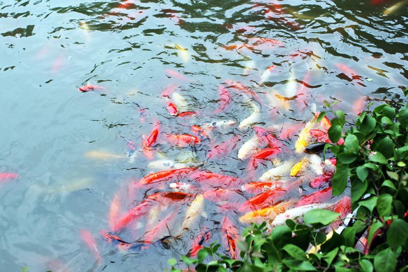 Amazing Fishes