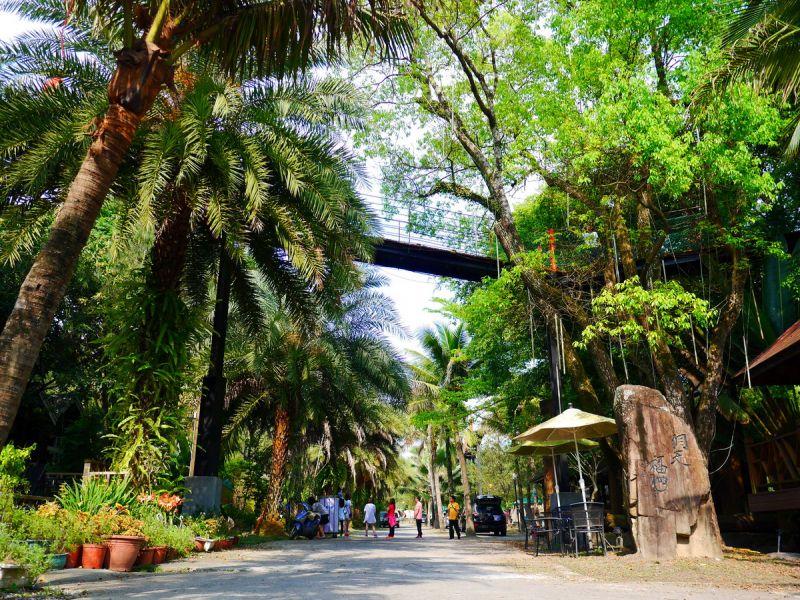 洋溢著南洋風情的椰林大道,彷彿到了墾丁度假。(何師父love露營提供)