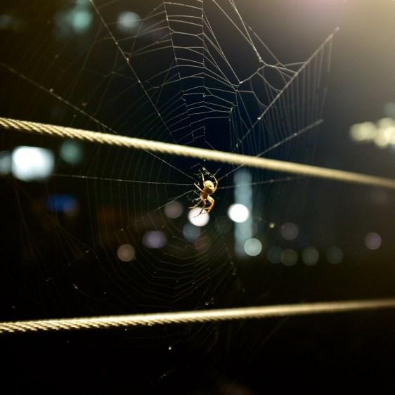 Spider, Spider, Burning Bright